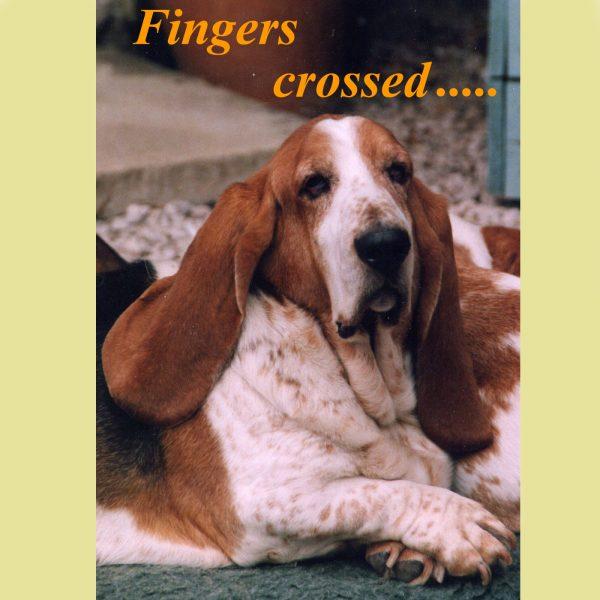 Fingers X new