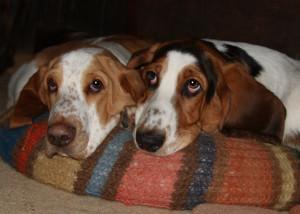 Bailey & Lucas